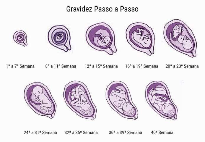 gravidez passo a passo